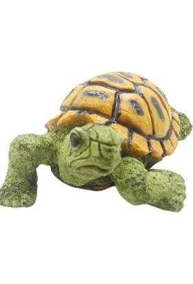 Nazar Antalya Kaplumbağa Küçük