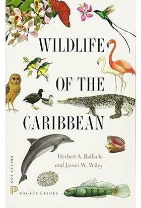 Wildlife Of The Caribbian - Herbert Raffaele