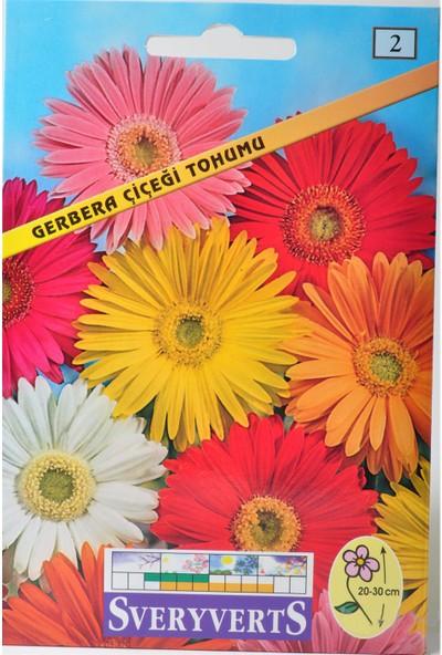 Sveryverts Gerbera Çiçeği Tohumu
