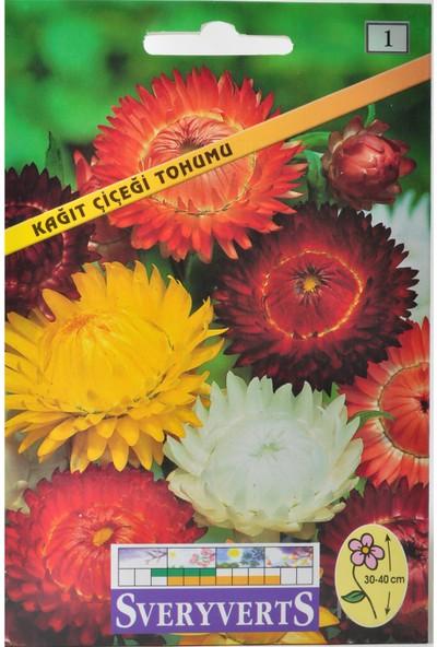 Sveryverts Kağıt Çiçek Tohumu