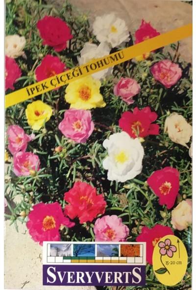 İpek Çiçeği Tohumu