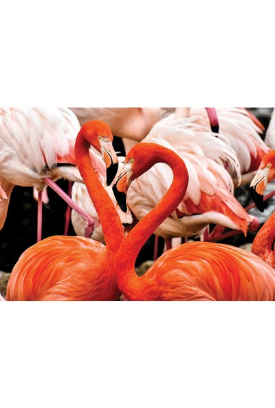 KS Games Animal Planet | Flamingo Lovers