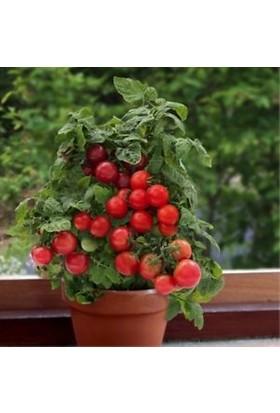 Bahçe Li̇fe Red Robi̇n Domates Tohumu+Çi̇mlendi̇rme Torfu
