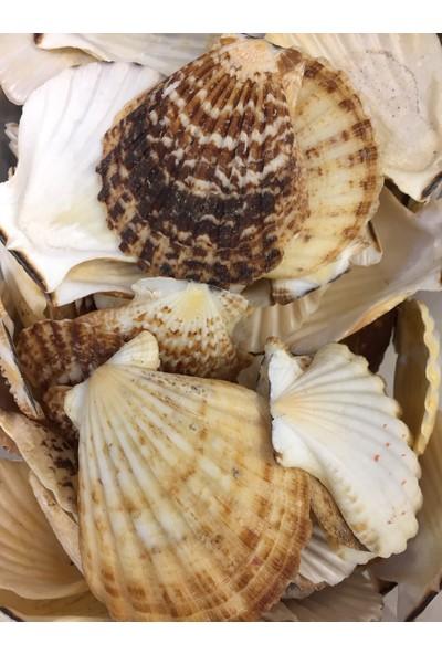 Nazar Doğal Deniz Kabuğu
