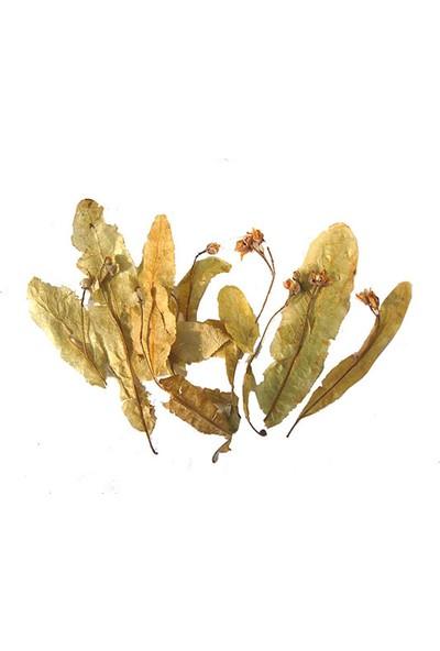 atasagun Şifa yaprak ıhlamur 75 gr