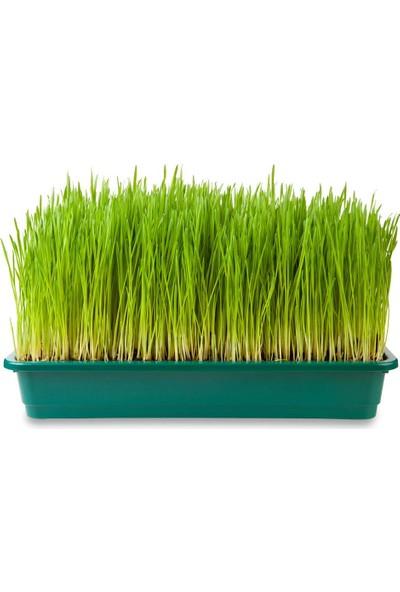 Bahçe Li̇fe Organi̇k Buğday Çi̇m'i̇ Eki̇m Ki̇t'i̇