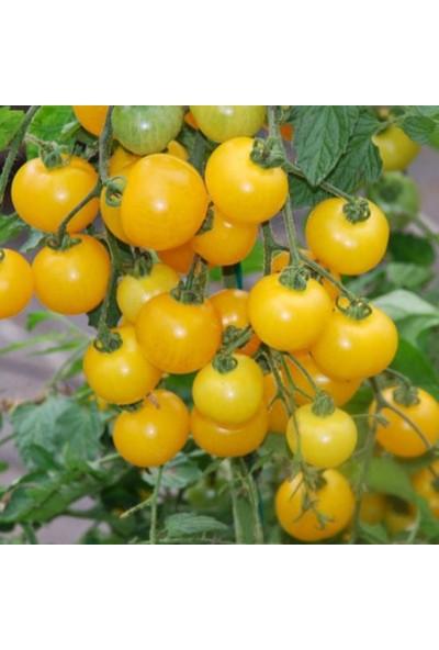 Bahçe Li̇fe Sarı Çeri̇ Domates Tohumu + Çi̇mlendi̇rme Torfu