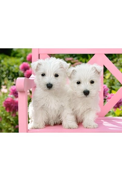 Castorland Beyaz Terrier Yavruları Puzzle - Castorland 1500 Parça