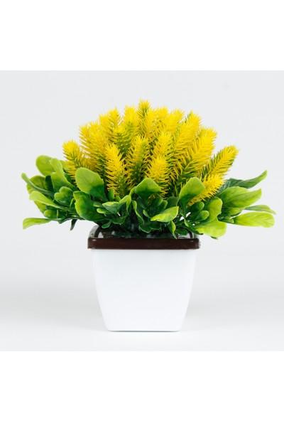 Bappay Minimal Dekoratif Kirpi Çiçek Saksıda Kirpi Masaüstü Çiçek