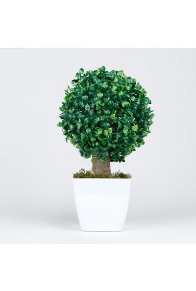 Bappay Tek Top Şimşir Dekoratif Minyatür Ağaç