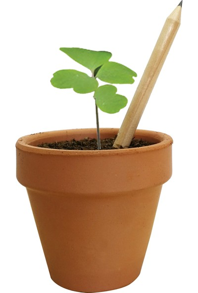 Fideland Fesleğen Tohumlu Kalem Naturel 50 Adet