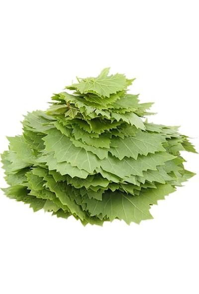 Kaleli Gurme Taze Asma Yaprağı 0,5 kg
