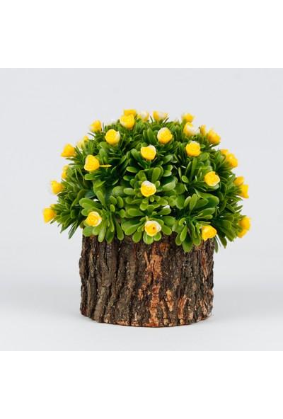 Bappay Doğal Kütük Üzerinde Çiçek Şimşir Dekoratif Çiçek