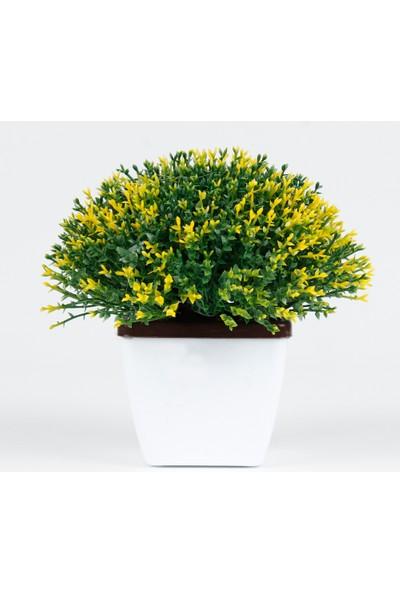 Bappay Minimal Dekoratif Bonus Çiçek Saksıda Masa Üstü Çiçek