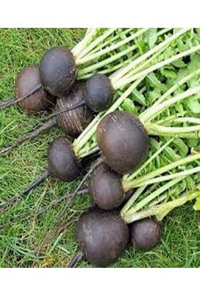 İntfa Doğal Siyah Turp Tohumu 100 g