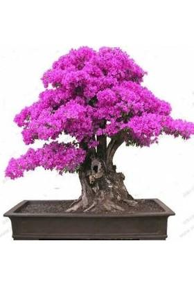 Bahçe Life Bonsai Yapılabilir Erguvan Ağacı Tohumu Ekim Kiti