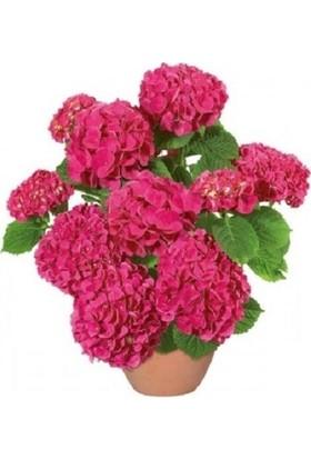 Berceste Peyzaj Ortanca Çiçeği Hydrangea Ev Ofis Çiçeği 40 cm