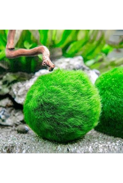İthal Çesit Moss Ball 3-4Cm Canlı Bitki