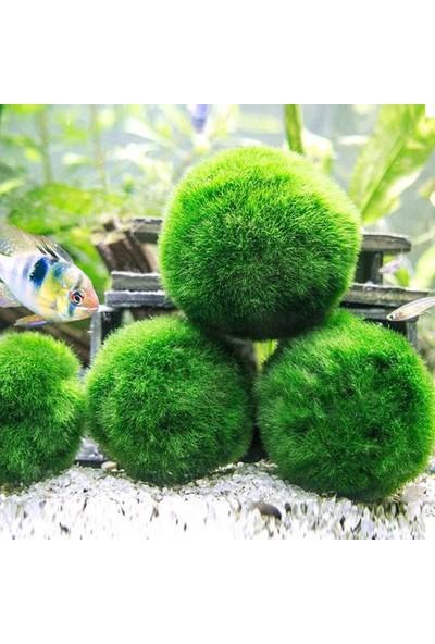 İthal Çesit Moss Ball 4-6Cm Canlı Bitki