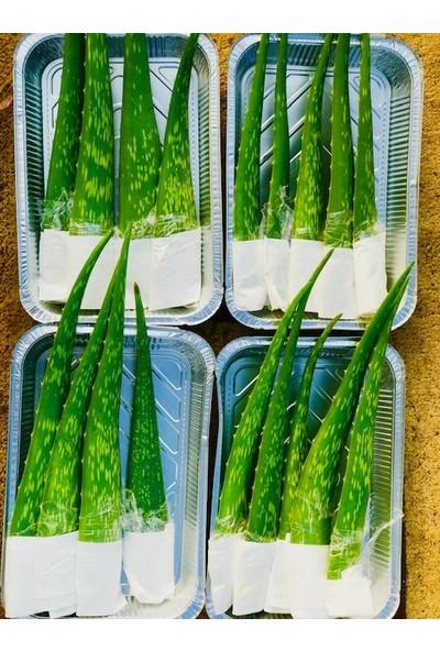 Akdeniz Tarım Aloe Vera Bitkisi Jel İçin Yaprak 1 kg