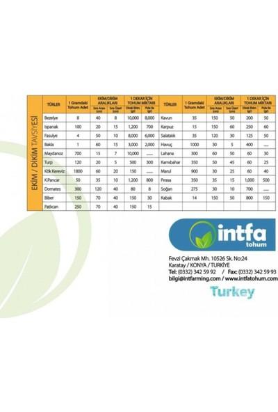 İntfa Doğal Turşuluk Kornişon Tohumu 1 kg