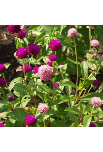 Bahçe Life Medine Çiçek Tohumu + Çimlendirme Torfu