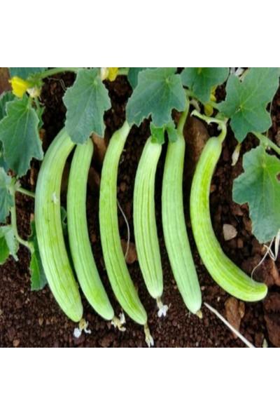 İdeasepet Yüksek Verimli Doğal Hita Acur Tohumu 150 Tohum