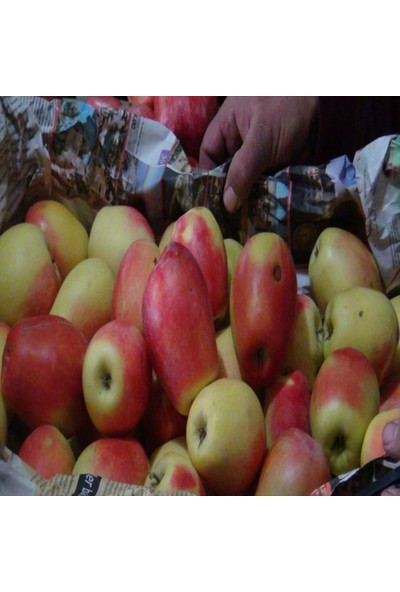 İdeasepet Tüplü Uzun Ömürlü Kağızman Elma Fidanı