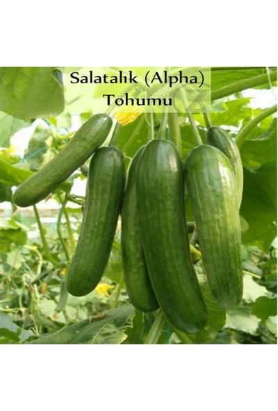 İdeasepet Naturel İntense Beith Alpha Hıyar Tohumu (100 Gram)
