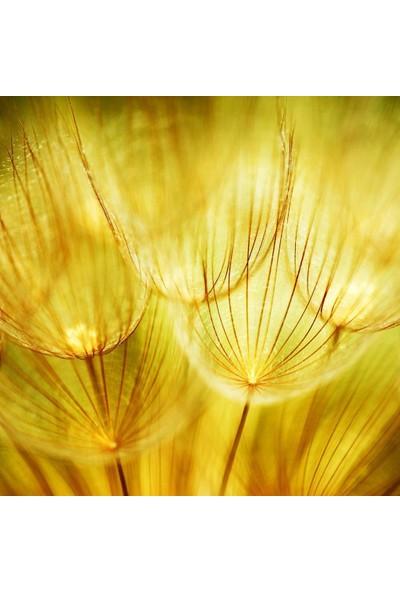 Henge Sarı Bahar Çiçeği Deseni Duşperdesi