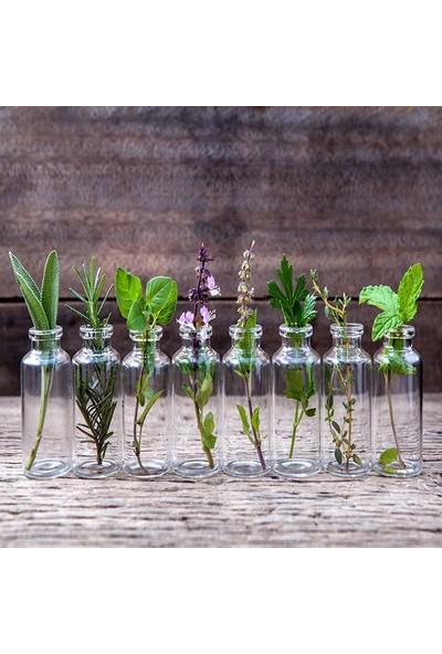 Henge Doğal Bitkiler Ahşap Nane Fesliğen Kekik yeşil Desenli Duşperdesi