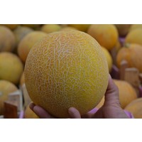 Paşa Tohumculuk kavun Tohumu- Ananas 25 Gr