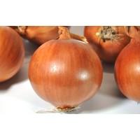 Paşa Tohumculuk soğan Tohumu - Bereket 25 Gr