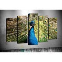 Caddeko Rpt108 Tavuz Kuşu Kanvas Tablo 70 x 100 cm