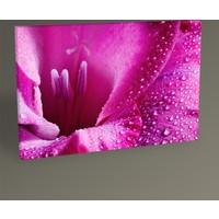 Tablo 360 Pembe Papatya Tablo 30 x 20 cm