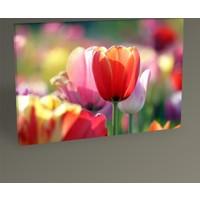 Tablo 360 Colorful Tulips Tablo 30 x 20 cm