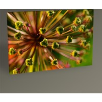 Tablo 360 Plant Flower Tablo 30 x 20 cm