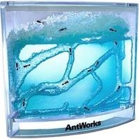 Hobi Eğitim Dünyası Hepsi Dahice Antwork Karınca Akvaryumu