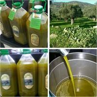 Egebay 5 Lt Dağ Köylerinin Yeşil İlk Hasat Naturel Sızma Zeytinyağı