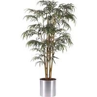 AnnaFlower Bambu Ağacı