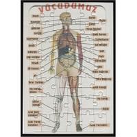 Yapboz Vücudumuzu öğreniyoruz (23 x 32 Ebat-42 Parça)