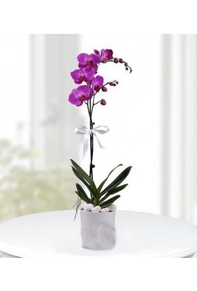 Karadeniz Fidancılık Orkide ( Mor ) Tek Dallı - Kargo Bedava