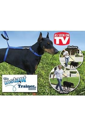 Toptancı Kapında Instant Trainer Leash Köpek Eğitim Tasması