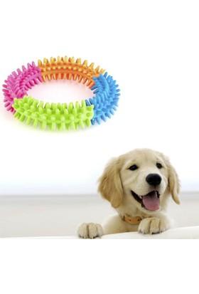 Toptancı Kapında Köpek Diş Temizleyici Oyuncak