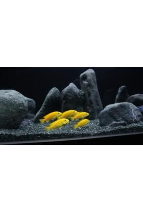 Kanki Pet Akvaryum Kumu Bazalt 2 - 3 mm Bitki kumu 1 Kg