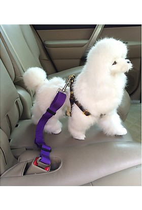 Vipfoni Köpekler İçin Otomobil Emniyet Kemeri