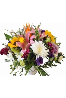Mum Esansı Çiçek Bahçesi