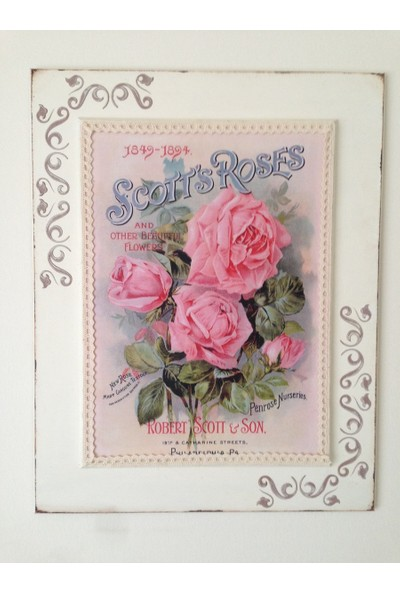 Victorian Rose Boutique French Rose Pano