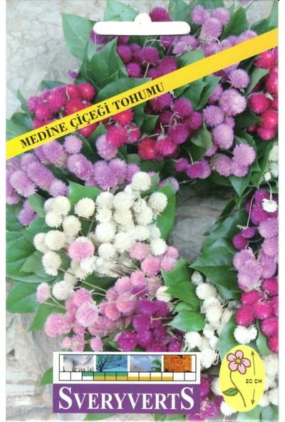 Sveryverts Medine Çiçeği Tohumu