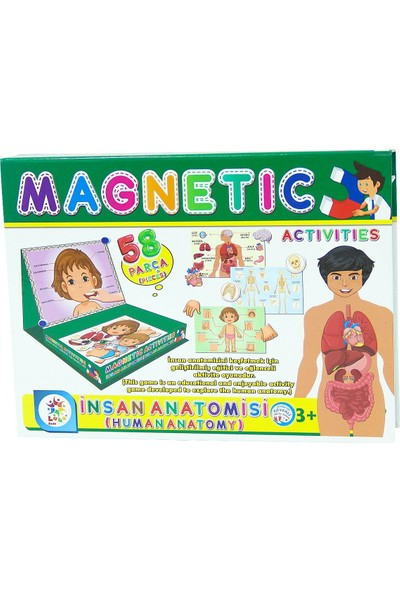 Manyetik Insan Anatomisi Aktivite